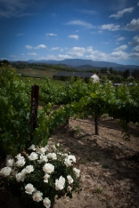 leoness-winery-vineyard-wedding-1264-photography-03